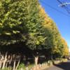 相生公園の紅葉 銀杏がきれいです。 (12月5日現在)