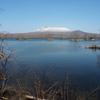 春です。大沼公園の水芭蕉…