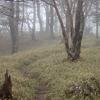 雨の山歩きを楽しめてよかった。