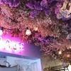 気分は、お姫様!大阪にあるお花に包まれるカフェとは?!