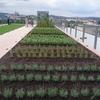 プラハ国立農業博物館:新プラハ豪華360度パノラマ  [UA-125732310-1]