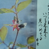 2月20日誕生日の花と花言葉