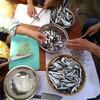 【詳細確定、ご当地魚で魚醤づくりWS 第一回@和歌山県有田市】