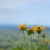 222/365 Blooming