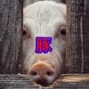美味しい豚料理をご紹介@難波 千日前