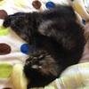 紙紐で編む猫ちぐら。