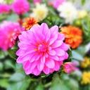 花風 咲彩の四季折々