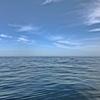 春みたいな陽気の中…イルカに遭遇&クエと20分の格闘💪   【  日本海ジギング★ 】