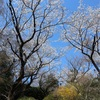 多摩川桜百景 -32. 都立平山城址公園-