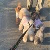 お散歩のお友達と幼稚園