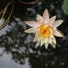【ネパール女1人旅 Day.11&12】グッバイネパール、「夢の庭園」観光。