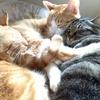 3匹の猫用ノートは【自分で作るノート】で*自分だけの【オリジナルノート】作りませんか?