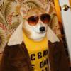 世の中で一番ファッションセンスの良い子犬は?