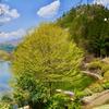 大桁湖(群馬県富岡)