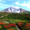 旭岳に紅葉を撮りに行ったら、なぜか牛を撮っていた件