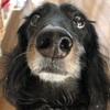 犬の耳トラブルにおススメのホームケア。頭をブルブルする・かゆい・赤い・臭う耳トラブルのサインを見逃さない。