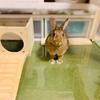 ウサギのマットかじり対策でサークルの模様替え