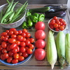 今日の収穫-今年の夏野菜の採点