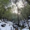 冬の屋久島に行ってきた①雪だらけの白谷雲水峡・苔むす森