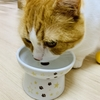 さようなら猫壱フードボウル…猫がいる家で食器が割れたときの対処法