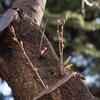 桜の写真を撮るときによくあること