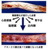 血管をボロボロにする加工食品