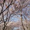 こどもの日と昨日の桜