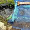 手賀沼の自然再生、一歩前進