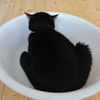 今日の黒猫モモ&白黒猫ナナの動画ー838