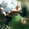 SAMURAI JEANS YOUTUBE CHANNEL/和綿サムライコットン収穫