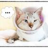 カップ麺CAT  肉うどん☆てーちゅけ