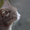 ムッジョの猫