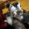 11月8日~17日|ひざ乗り猫は、幸せへの準備。~活動の限界? 命の限界?(その8)~