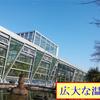 小石川養生所が前身の小石川植物園には、薬園保存園という由緒正しい薬草園があるんです。