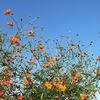 秋らしい、青空の広がった快晴のイイ天気。思わず旅行に出掛けたくなるね。