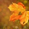 食欲の秋!美容と健康におススメの食べもの3選