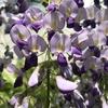4月中旬の花壇。退職したおっさんはなぜ園芸や盆栽に嵌るのか。