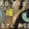 ネコの飼い主  あるある:ネコの飼い主さんの行動学