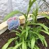 番外編 最近植えた花たち