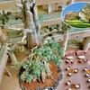 鹿児島県 屋久島 「屋久島いわさきホテル」滞在、巨大「屋久杉」レプリカに圧倒、心遣いの老舗ホテル