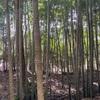 市民林業士活動② 竹と雑木林