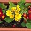 道端を彩る「鉢植えの花」