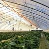 ウオーターカーテン「井戸水利用のエコ暖房」