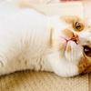 いやな夢を見ていたら、愛猫が優しく起こしてくれました。
