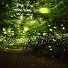 済州島(チェジュ島)初夏の祭り情報 #夜の森を明るく照らす「清水コッチャワル蛍祭り」