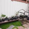 外に出した植物の動きとフレキシブルバケツビオトープ