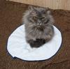手作りご飯のレシピ1【慢性腎不全・腎臓病の猫向け】
