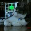 なんていう顔おネコさま。