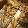 神奈川県立生命の星・地球博物館の企画展 博物館の標本工房