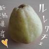 【西洋梨の貴婦人】ルレクチェを食べるよ【新潟県】